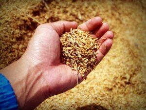 paille-de-riz